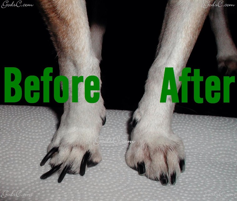 What To Do If Cat S Nails Are Too Long