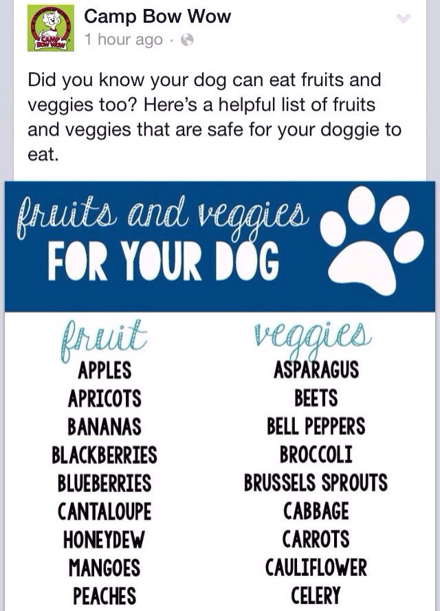 Fruits And Veggies For Your Dog 🐾🐕