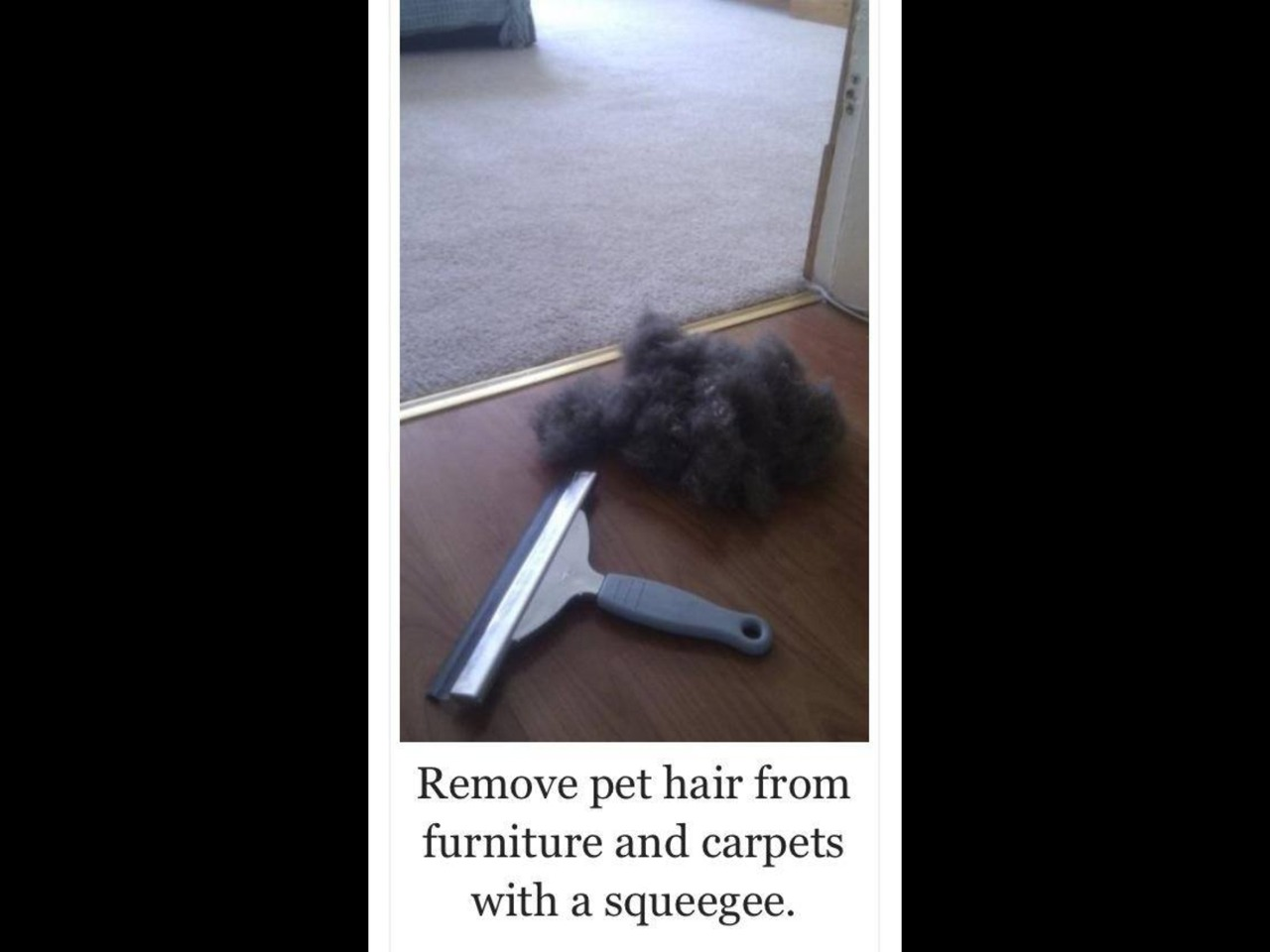 Use Squeegee To Remove Pet Hair From Carpet Furniture Trusper