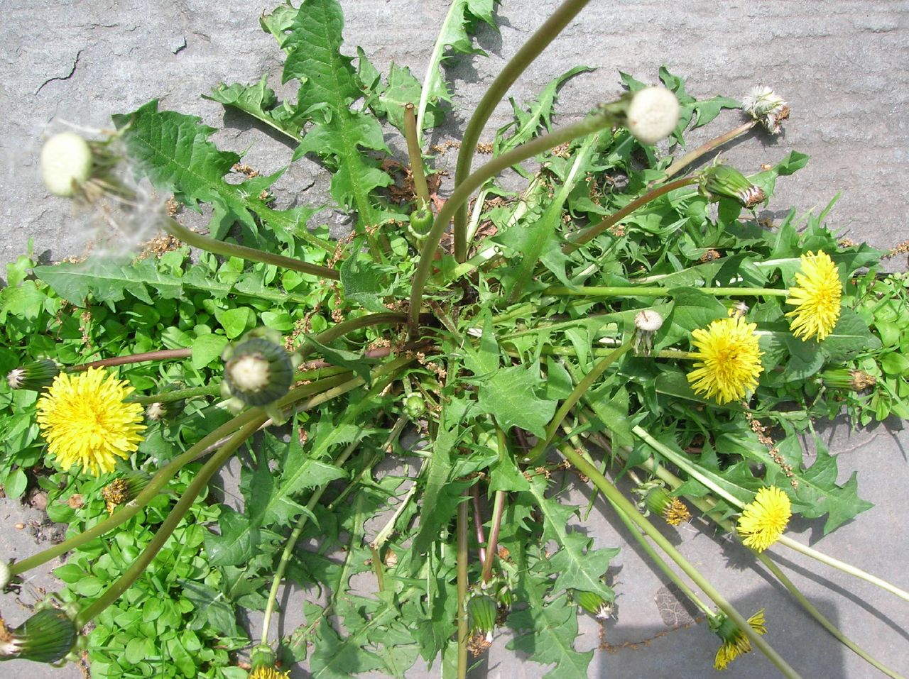 Get rid of weeds with household items - Get rid weeds using vinegar ...