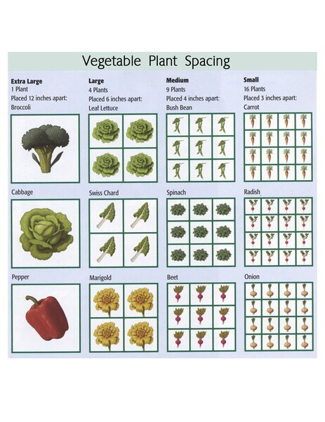 How to plan your vegetable garden trusper for Planning out a vegetable garden