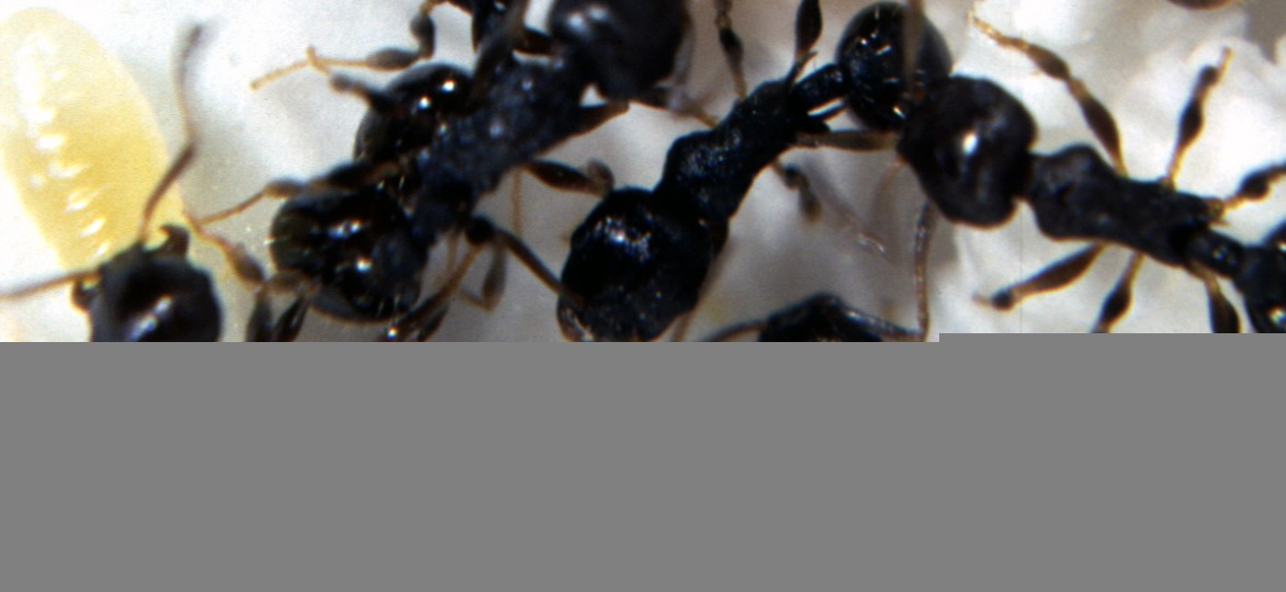 Natural Way To Get Rid Of Ants And Spiders