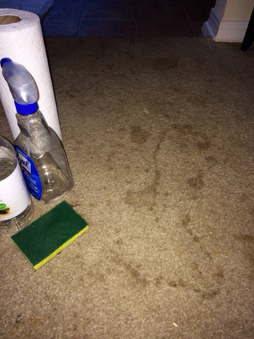 Cheap easy way to get rid of carpet stains new old trusper - Coffee stains oil stains get rid easily ...