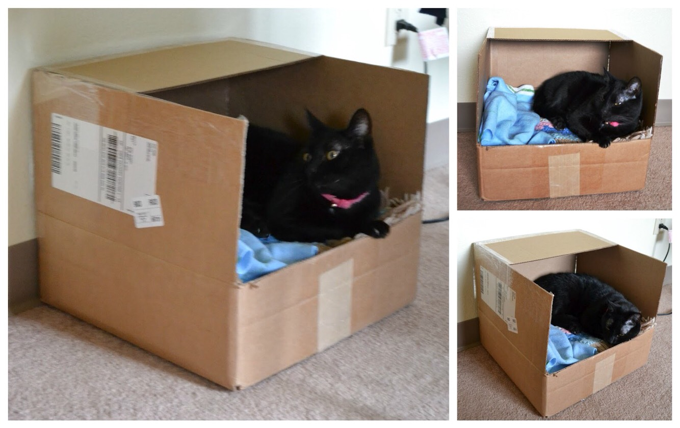 Diy cat beds the image kid has it for Make a cat bed out of a box