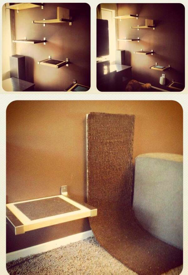 Diy cat beds trusper for Easy diy cat furniture