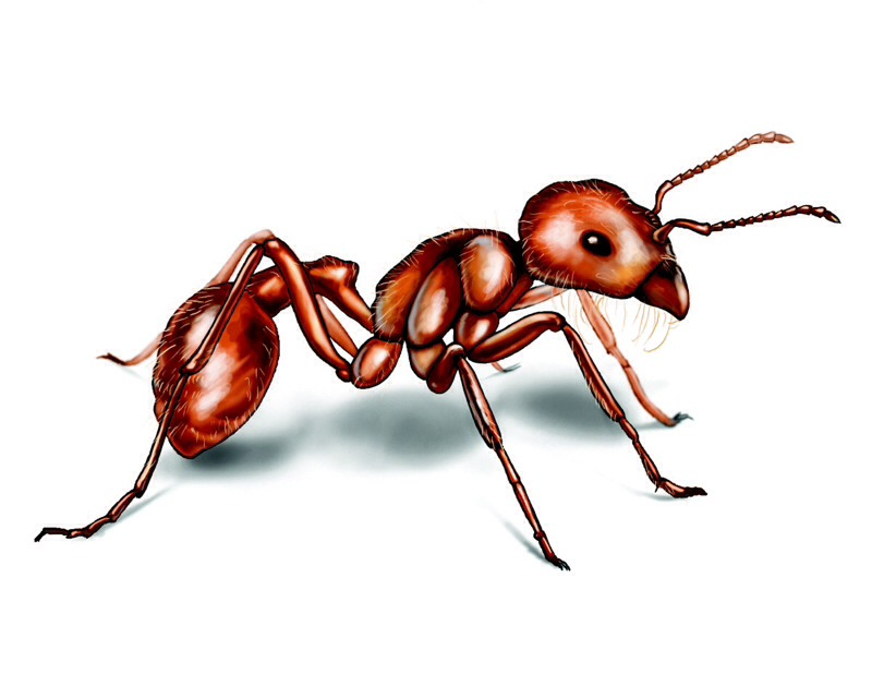 Easy kitchen tip bay leaf to keep critters away from pantry foods trusper - Keep ants away in simple ways ...