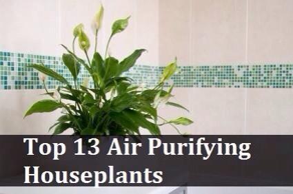 Top 10 air filtering plants trusper for Best air filtering houseplants