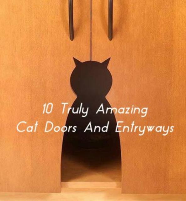 10 Amazing Cat Doors AND Entryways!!!!
