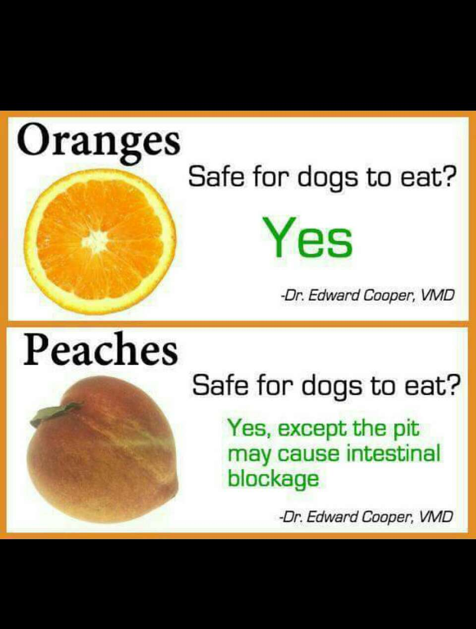 What Foods Can Dogs Eat And Cannot Eat