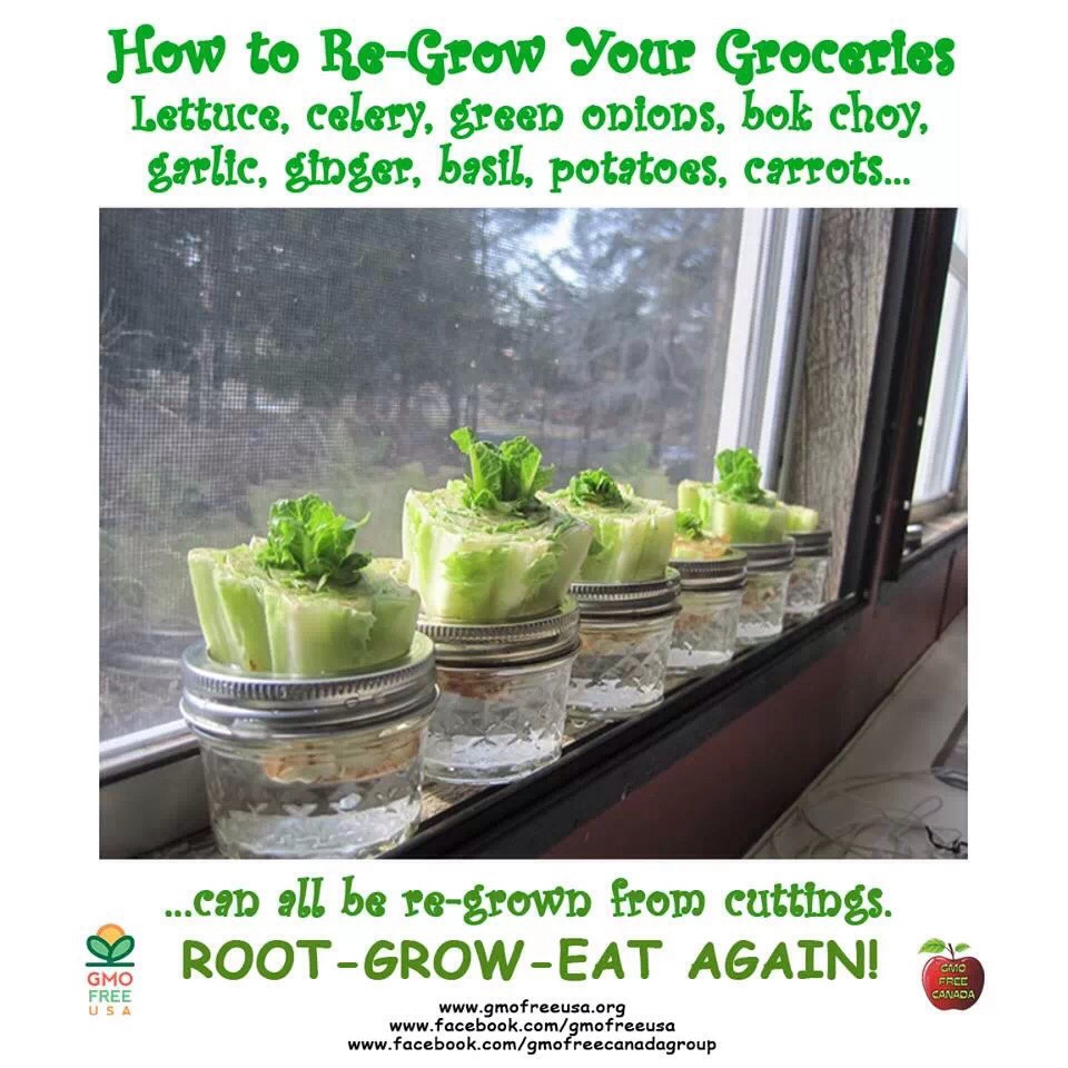 16 Foods That Ll Re Grow From Kitchen Scraps: How To Re-grow Your Groceries