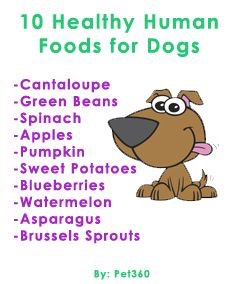 """10 Healthy Human Foods For Dogs"""