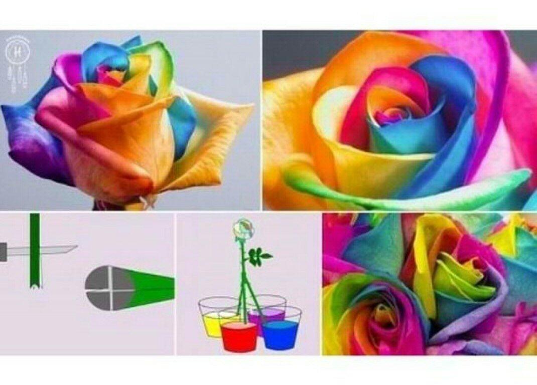 How To Tye Dye A Flower Trusper