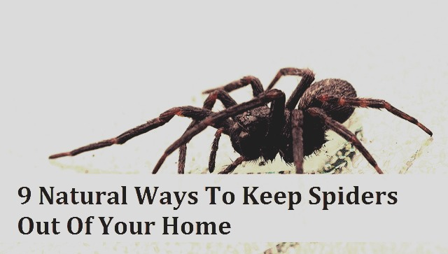 Natural Ways To Keep Spiders Out Of Your Home | Trusper