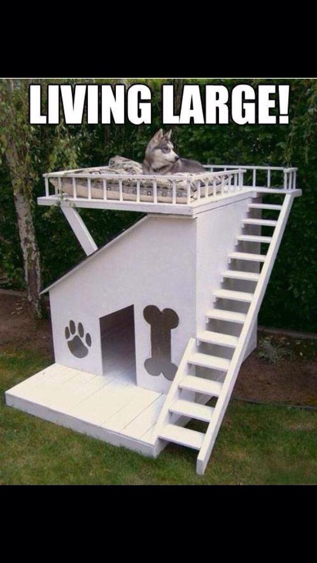 Amazing Dog House Every Dog Needs!