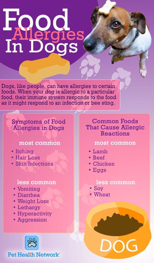 Can You Be Allergic To Dogs And Not Cats