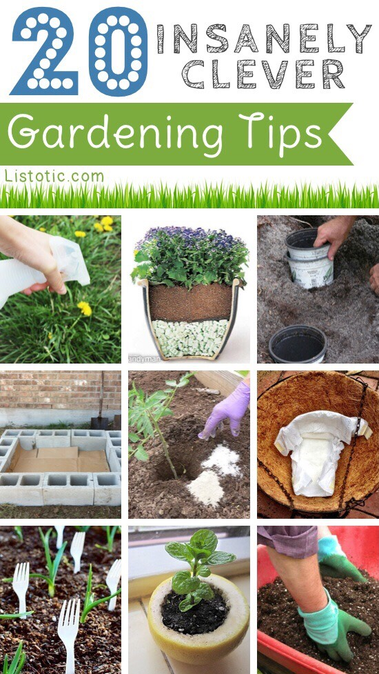 14 simple gardening tips and tricks trusper for Gardening advice