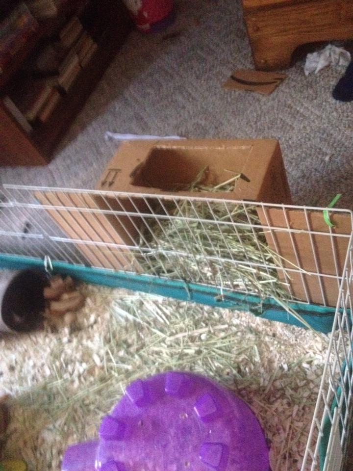 Homemade guinea pig hay feeder trusper for Homemade guinea pig