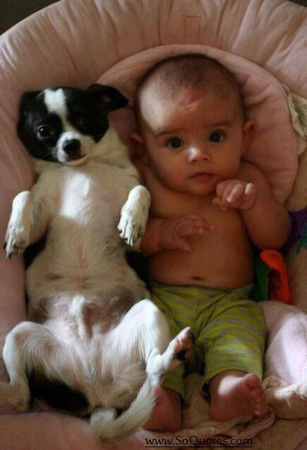 Babies And Pets.