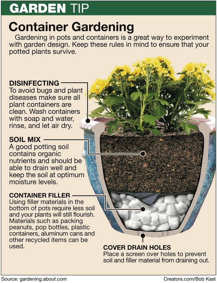 Container gardening 101 trusper - Container gardening basics ...