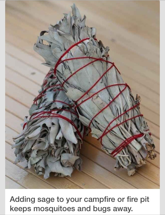 Putting sage in your fire or pit will help keep away bugs for How to keep spiders away from your bed
