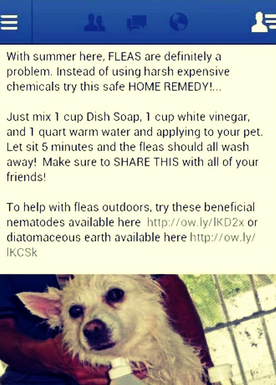 Get Rid Of Fleas On Your Pet