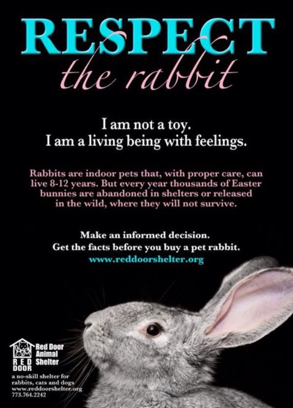Rabbit Health And Toy Tips