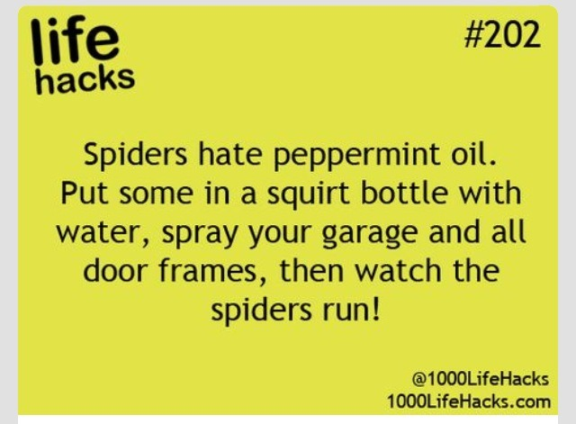 Awesome tip to keep those spiders away trusper for How to keep spiders away from your bed