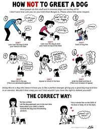 Most Helpful Ways On How To Treat A Dog!