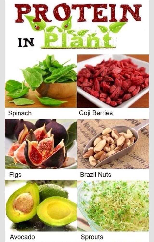 high protein food list for vegetarians trusper