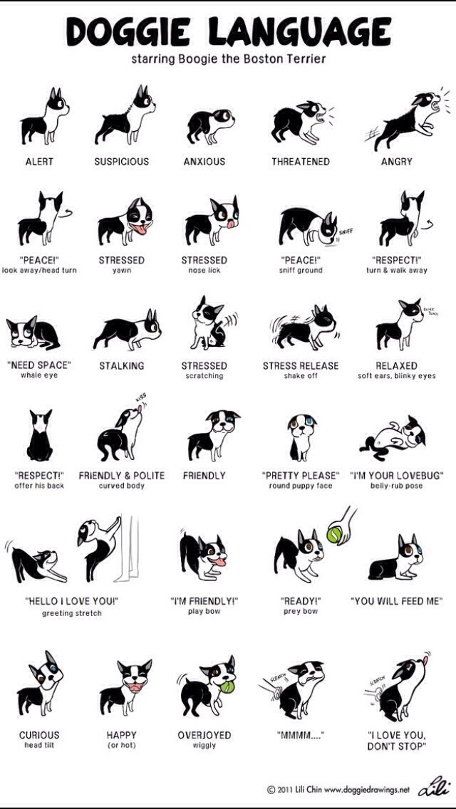 🐶 Dog Language: What You Need To Know🐶