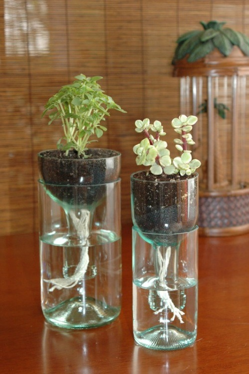 Upcycle Old Glass Bottles Into Modern Self Watering Herb