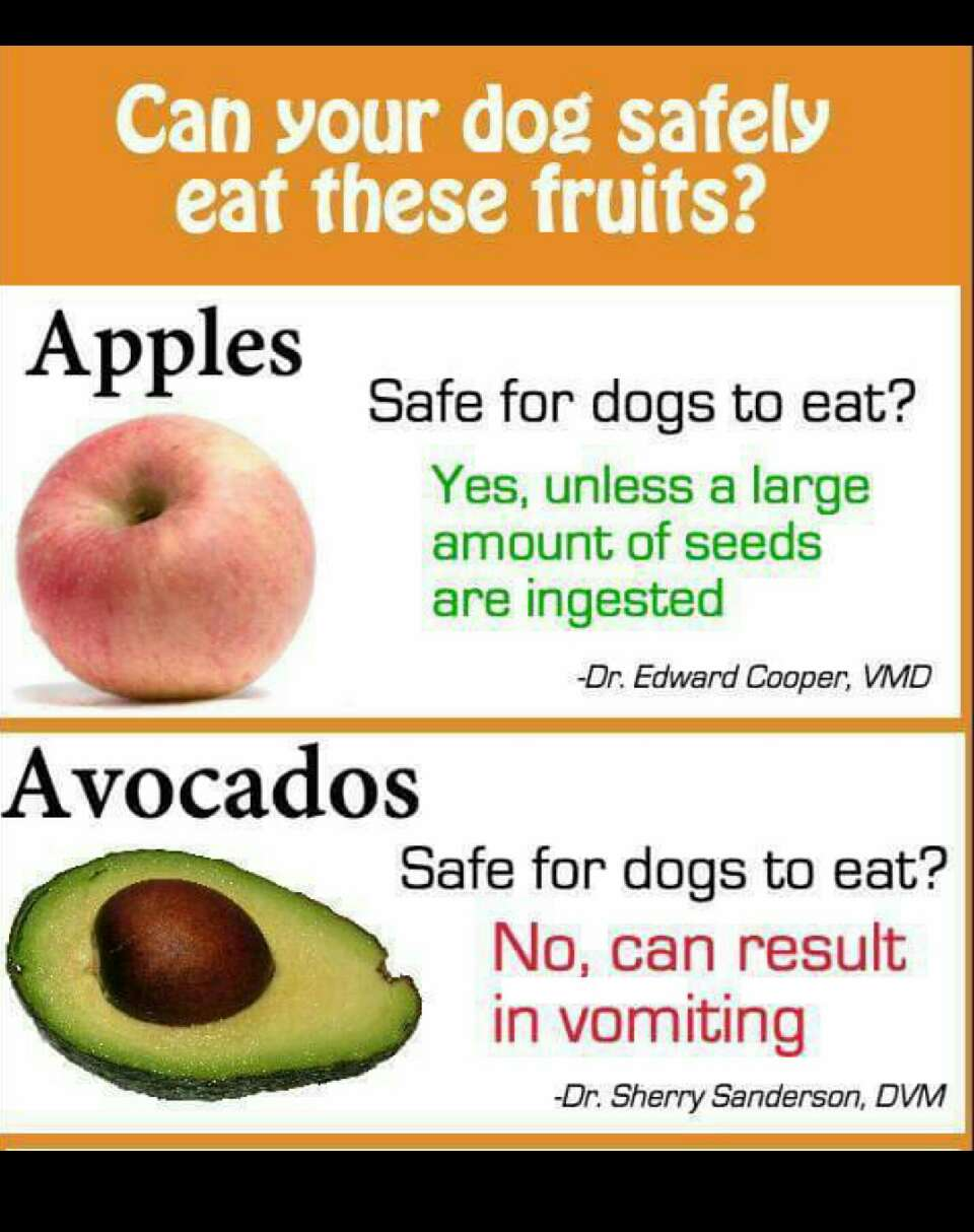 What Fruits Can Dogs Eat
