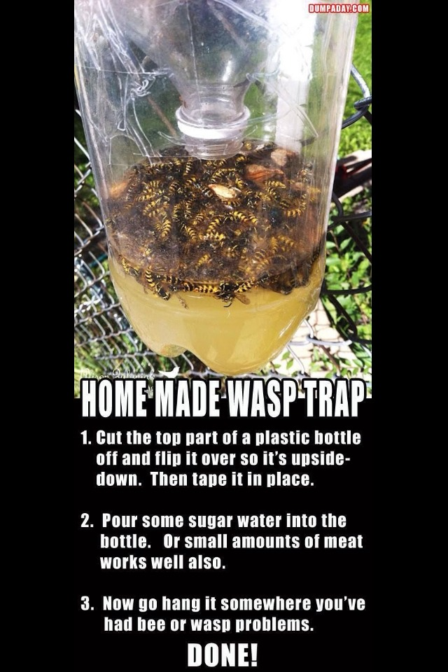 Bees and wasps around your house trusper for How to stop spiders entering your house