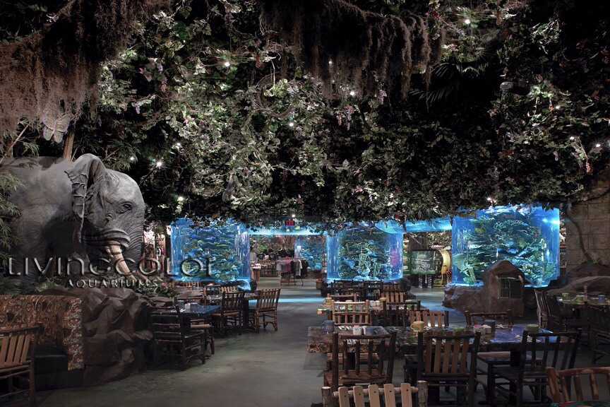 Where To Eat In Orlando Florida I Would Recommend Olive Garden Rainforest Cafe And Dominoes