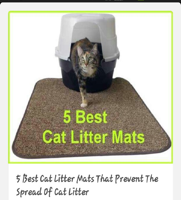 Tips To Reduce Smell Of Cat Litter