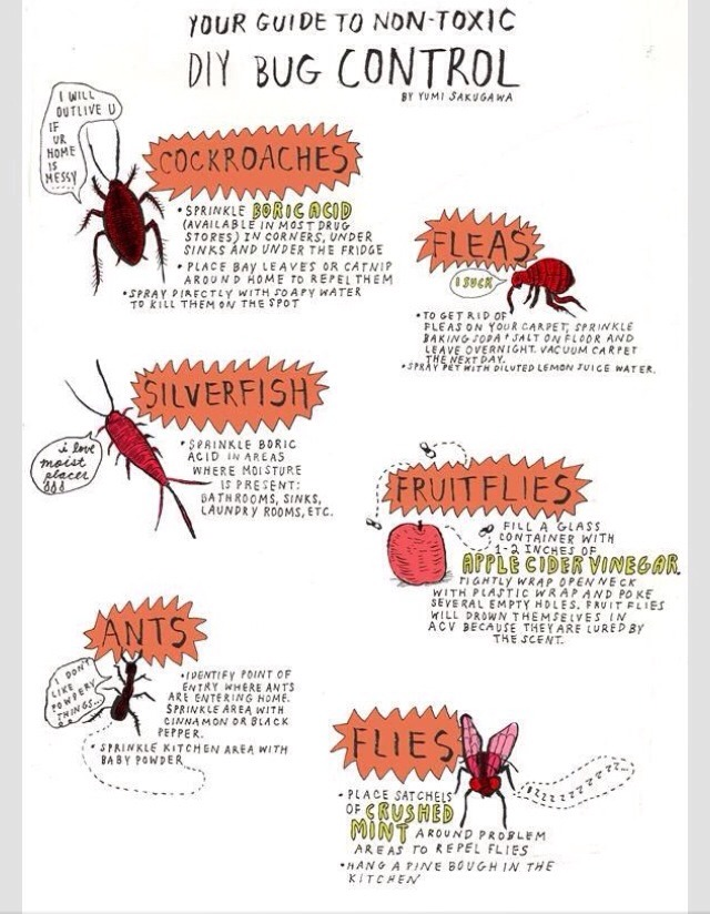 👍❤️Get Rid Of The Bugs In Your Garden❤️👍