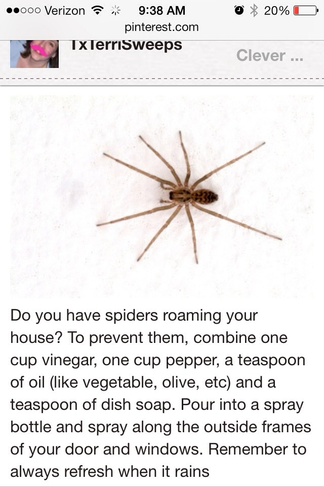 Get rid of spiders from your home trusper for How to get rid of spiders in house