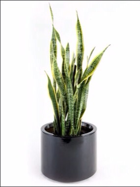 best plants to detox your home trusper. Black Bedroom Furniture Sets. Home Design Ideas
