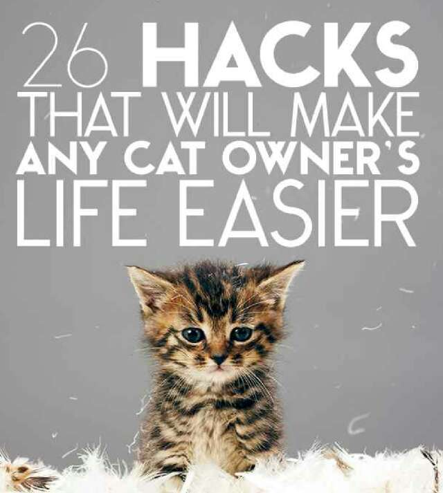 26 Hacks That Will Make Any Cat Owners Life Easier!!