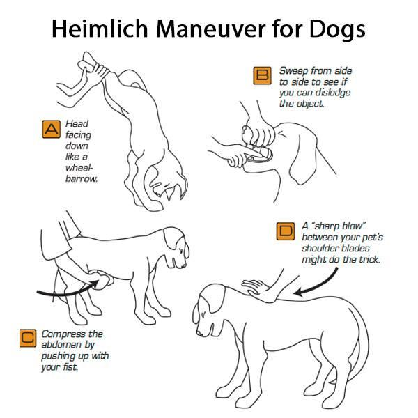 How To Do The Heimlich For Dogs
