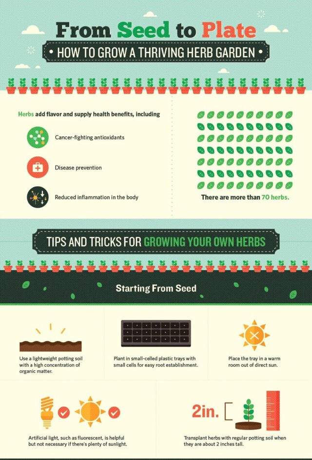 ❤️❤️How To Grow A Thriving Herb Garden❤️❤️