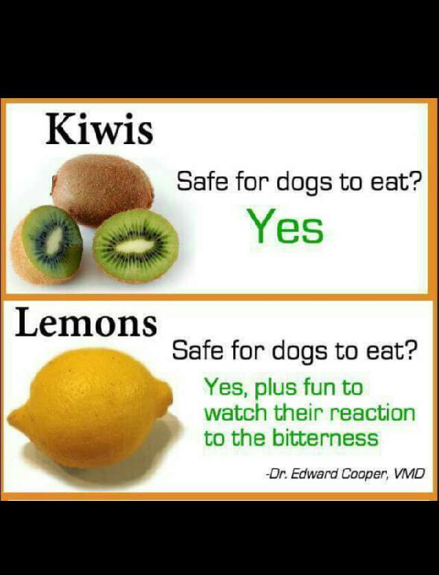 fruits that dogs can and cannot eat