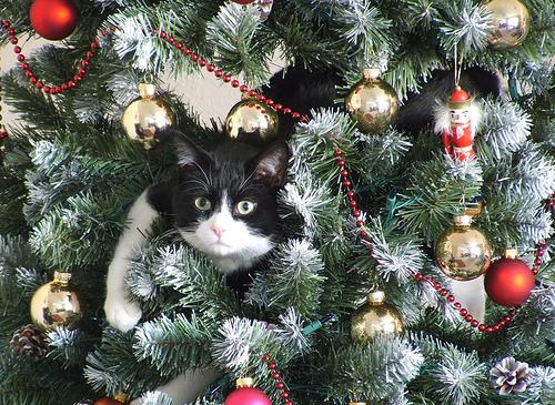 how to keep your cat out of your christmas tree trusper. Black Bedroom Furniture Sets. Home Design Ideas
