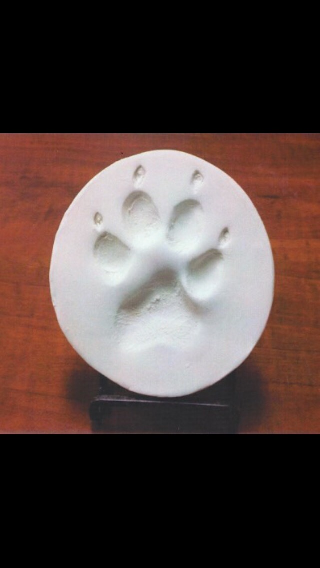 Diy Homemade Dog Paw Print Ornaments 🐶🎄