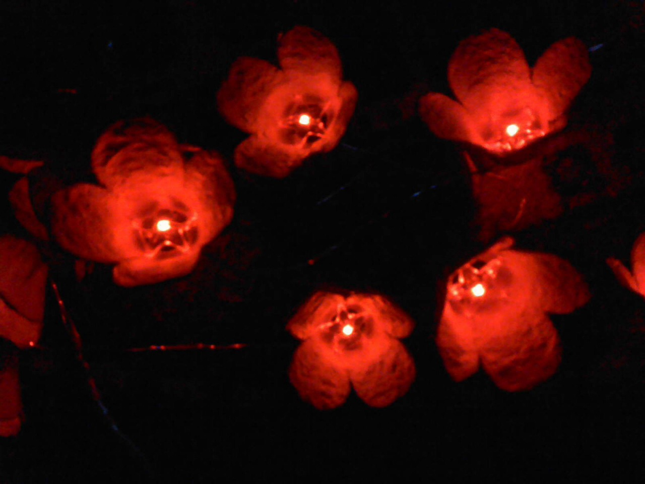 Diy Floral String Lights : Diy Flower String Lights From Egg Cartons???? Trusper