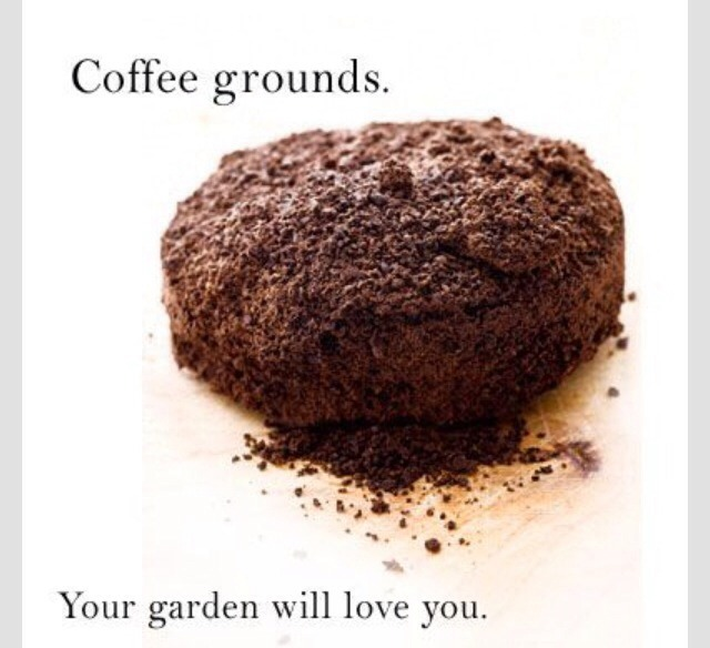 Adding Coffee Grounds To Your Garden Will Bring You
