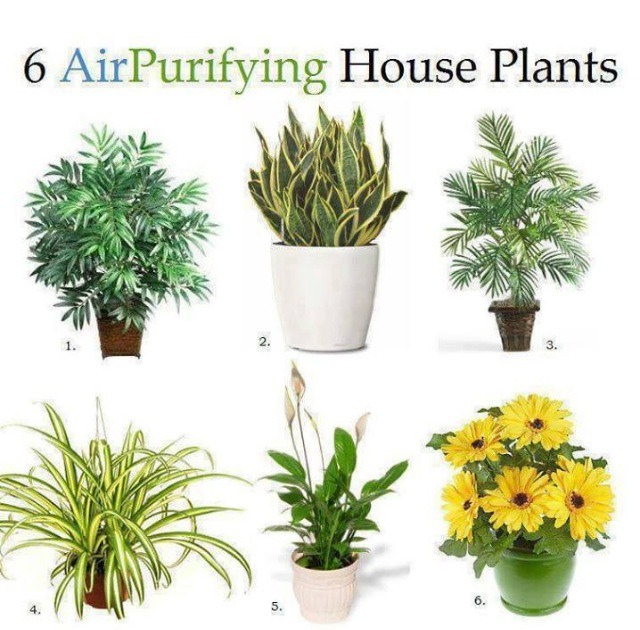 6 air purifying house plants trusper - Plants can improve ambience home ...