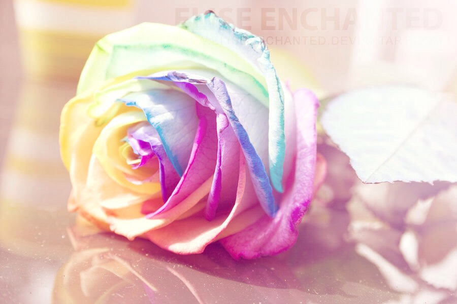 How to make your own rainbow roses trusper for How to color roses rainbow