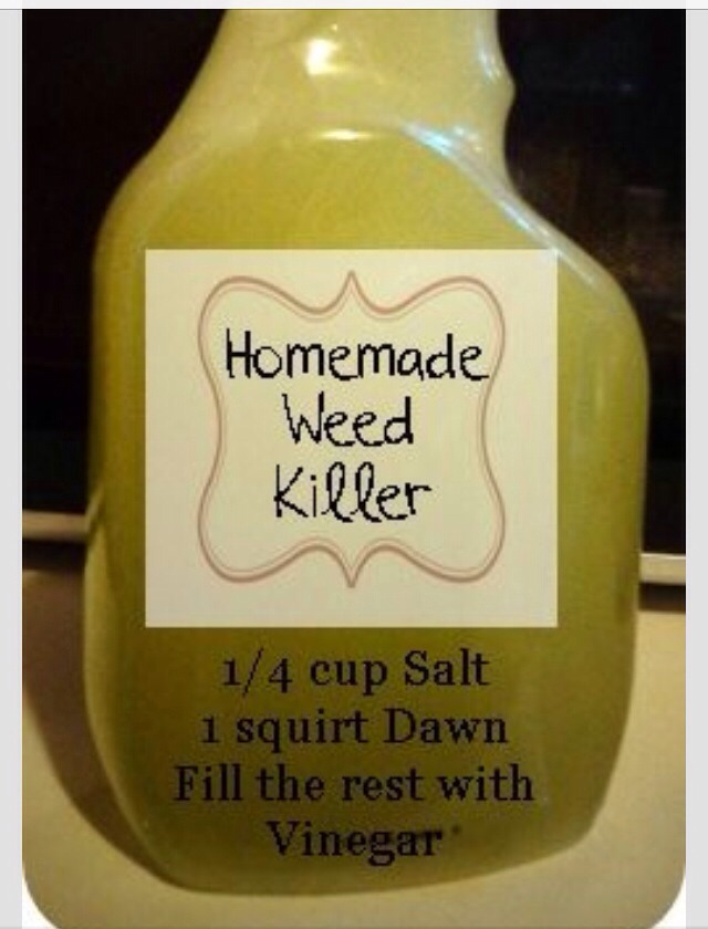 🌹🌷🌸Homemade Weed Killer Recipe🌸🌷🌹