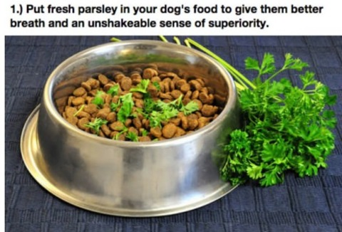 These 15 Dog Lifehacks Will Make You And Your Dog's Lives So Much Better.